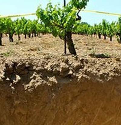 Lodi Wine Soils